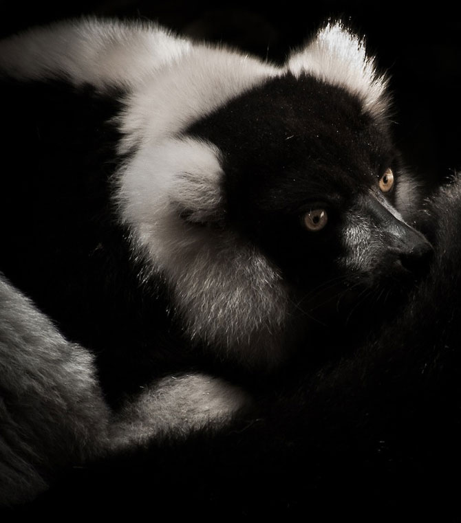 Portretist de animale: Joshua Arlington - Poza 4