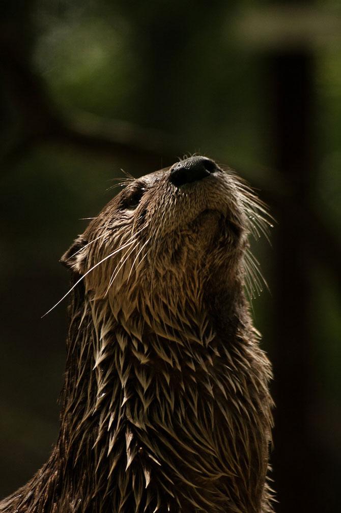 Portretist de animale: Joshua Arlington - Poza 6