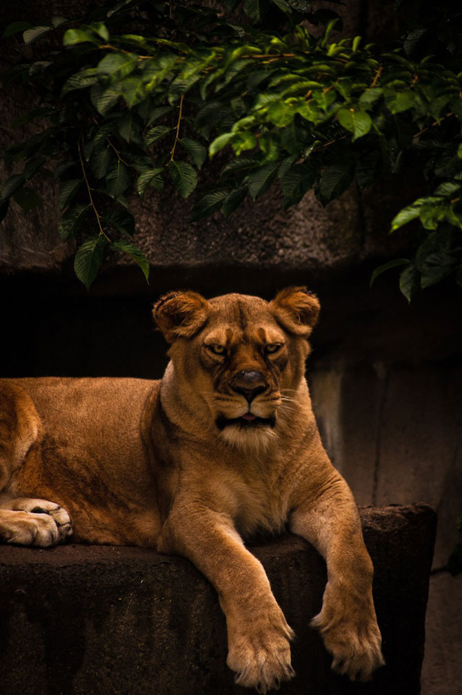 Portretist de animale: Joshua Arlington - Poza 8