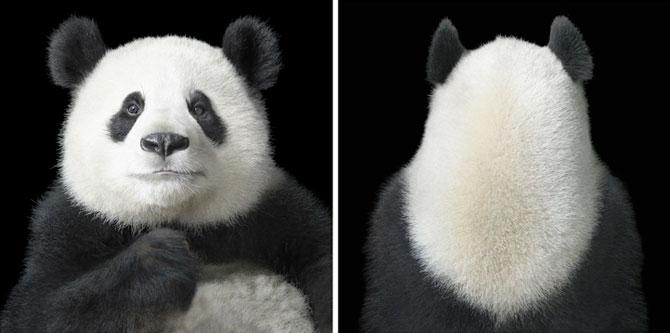 Animale expresive, portretizate de Tim Flach - Poza 1