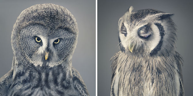 Animale expresive, portretizate de Tim Flach - Poza 3