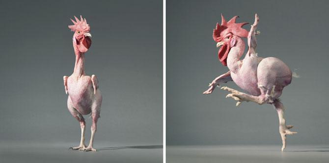 Animale expresive, portretizate de Tim Flach - Poza 4
