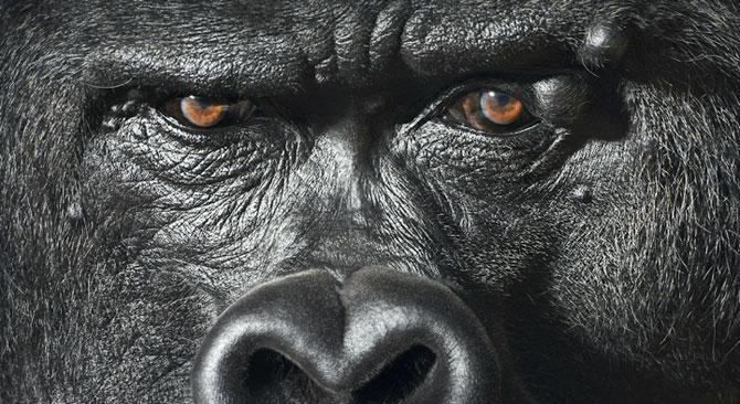 Animale expresive, portretizate de Tim Flach - Poza 5