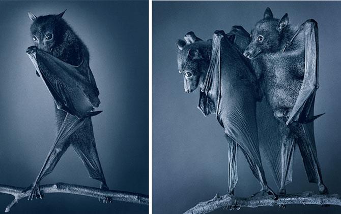 Animale expresive, portretizate de Tim Flach