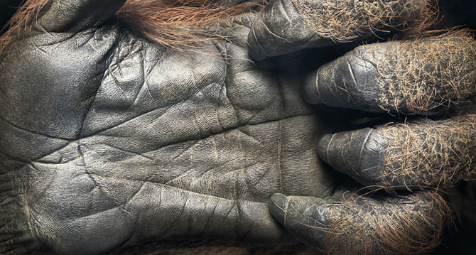 Animale expresive, portretizate de Tim Flach - Poza 10