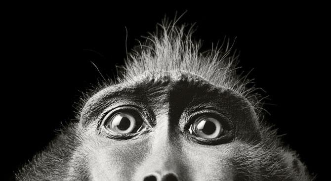 Animale expresive, portretizate de Tim Flach - Poza 12