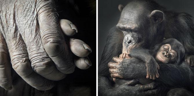 Animale expresive, portretizate de Tim Flach - Poza 13