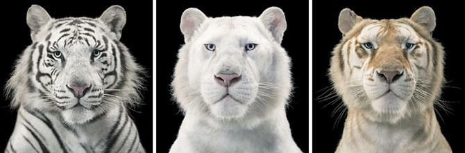 Animale expresive, portretizate de Tim Flach - Poza 14