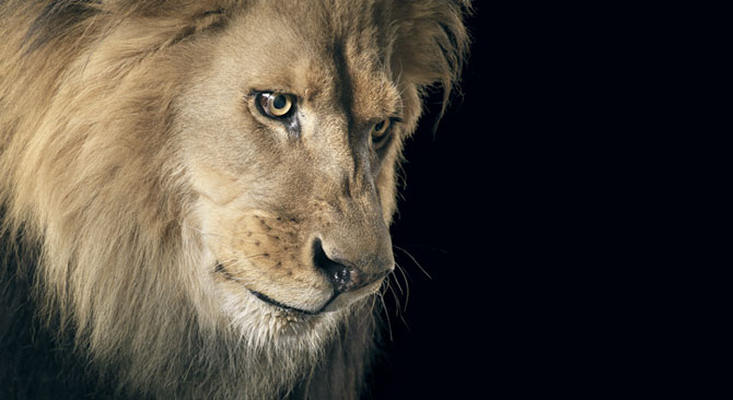 Animale expresive, portretizate de Tim Flach - Poza 15
