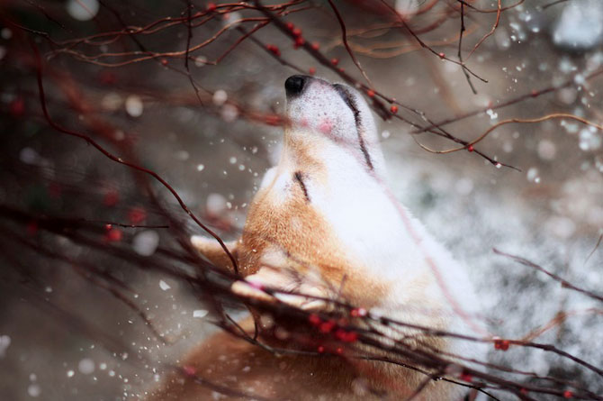 11 portrete adorabile de caini, de Jessica Trinh - Poza 4