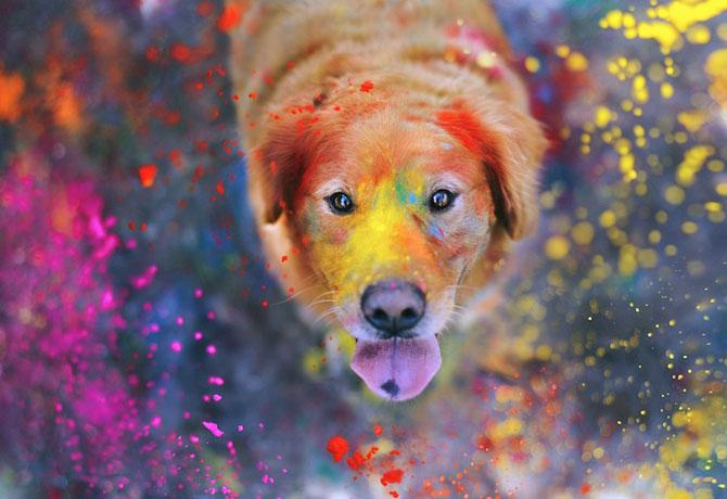 11 portrete adorabile de caini, de Jessica Trinh - Poza 5