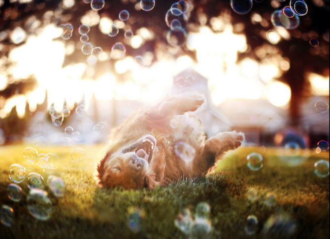 11 portrete adorabile de caini, de Jessica Trinh - Poza 9