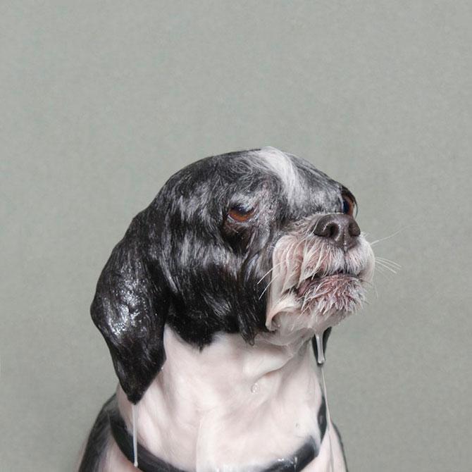 Portrete haioase de caini uzi - Poza 3