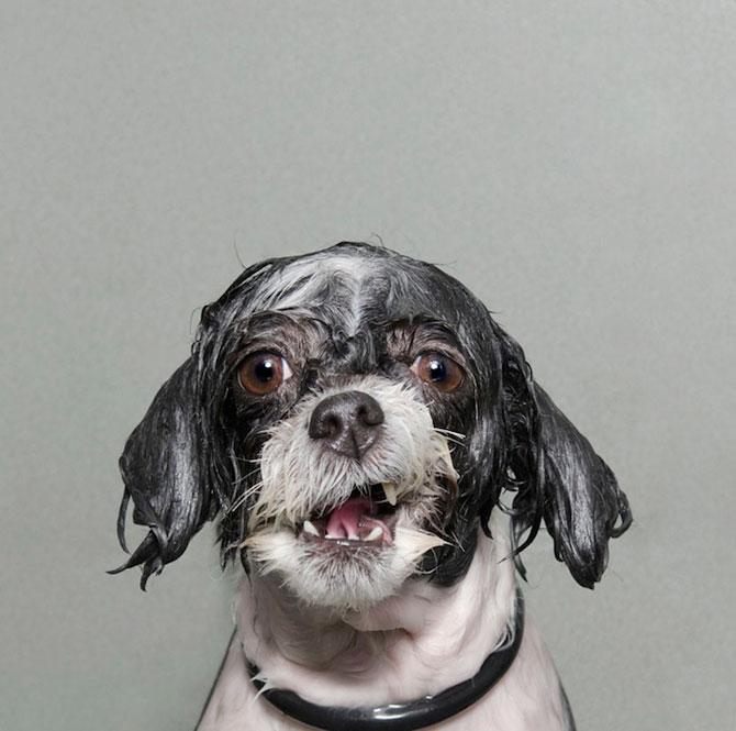 Portrete haioase de caini uzi - Poza 5