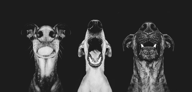 Cele mai expresive portrete de catei - Poza 3