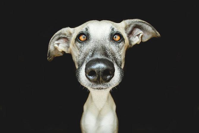 Cele mai expresive portrete de catei - Poza 5