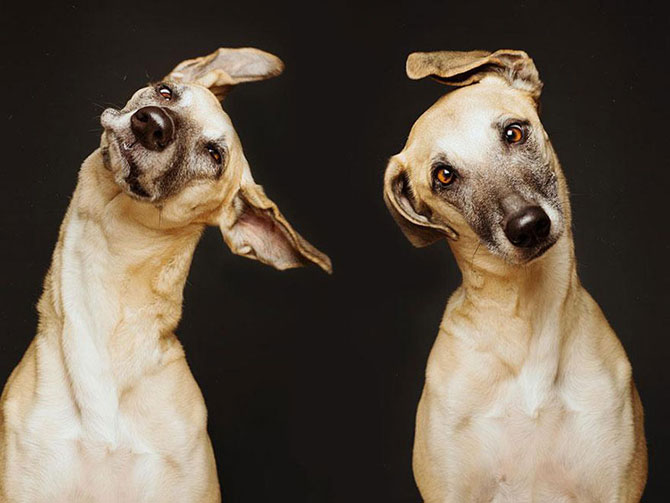 Cele mai expresive portrete de catei - Poza 8