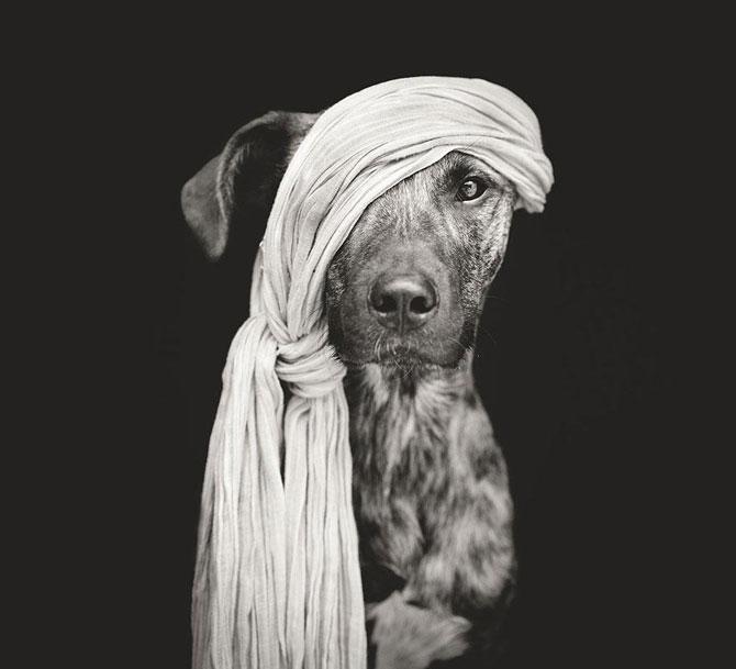 Cele mai expresive portrete de catei - Poza 12