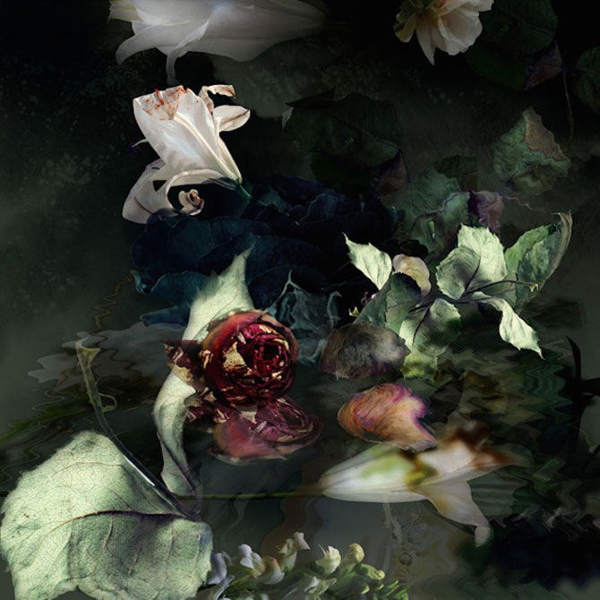 Portrete expresive de flori, de Isabelle Menin - Poza 2