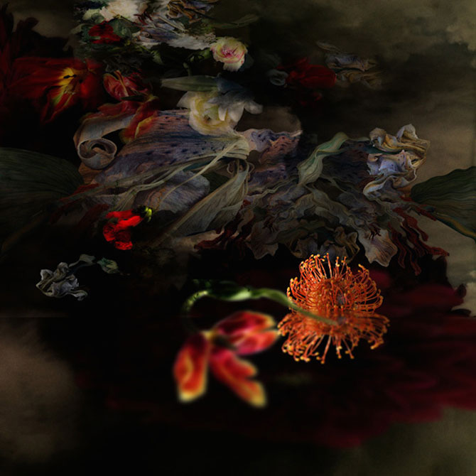 Portrete expresive de flori, de Isabelle Menin - Poza 9