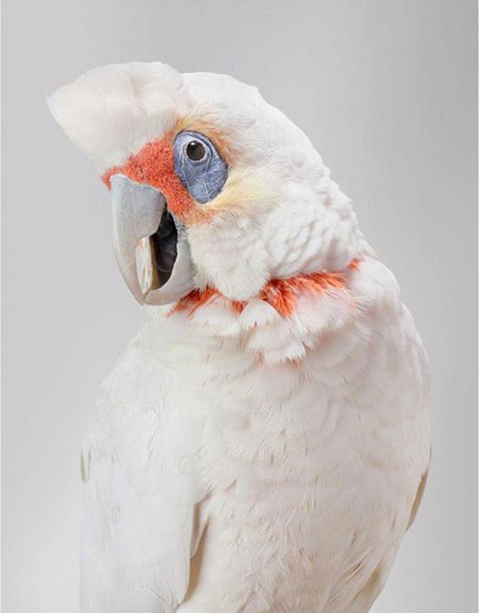 Portrete superbe de pasari, de Leila Jeffreys - Poza 4