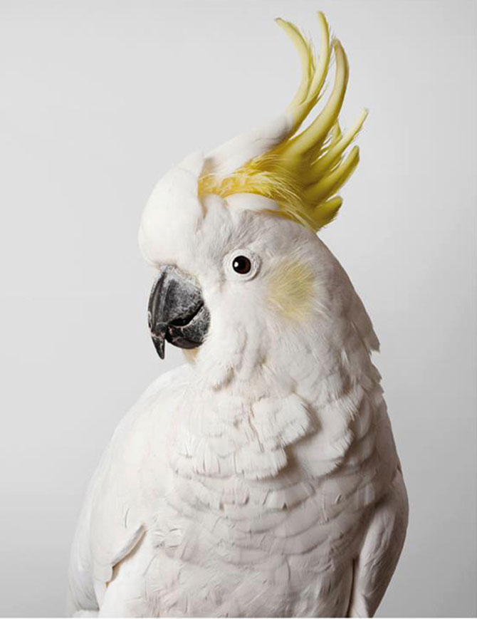 Portrete superbe de pasari, de Leila Jeffreys - Poza 6
