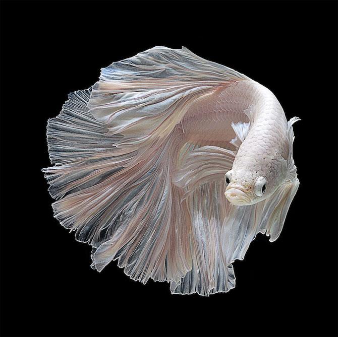 Gratia dansului pestilor in acvariu, de Visarute Angktanavich - Poza 4