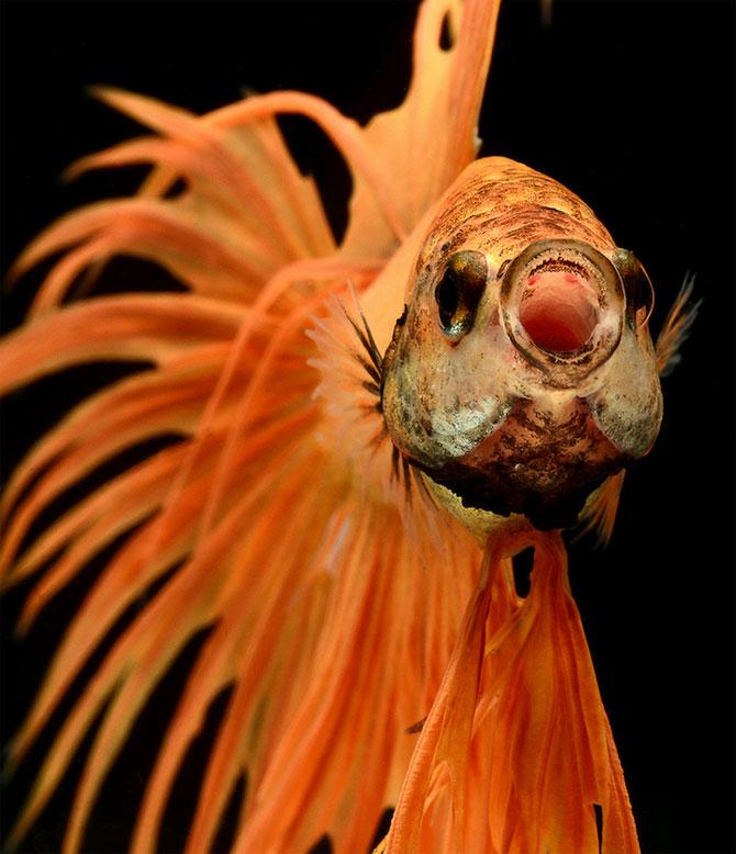 Gratia dansului pestilor in acvariu, de Visarute Angktanavich - Poza 6
