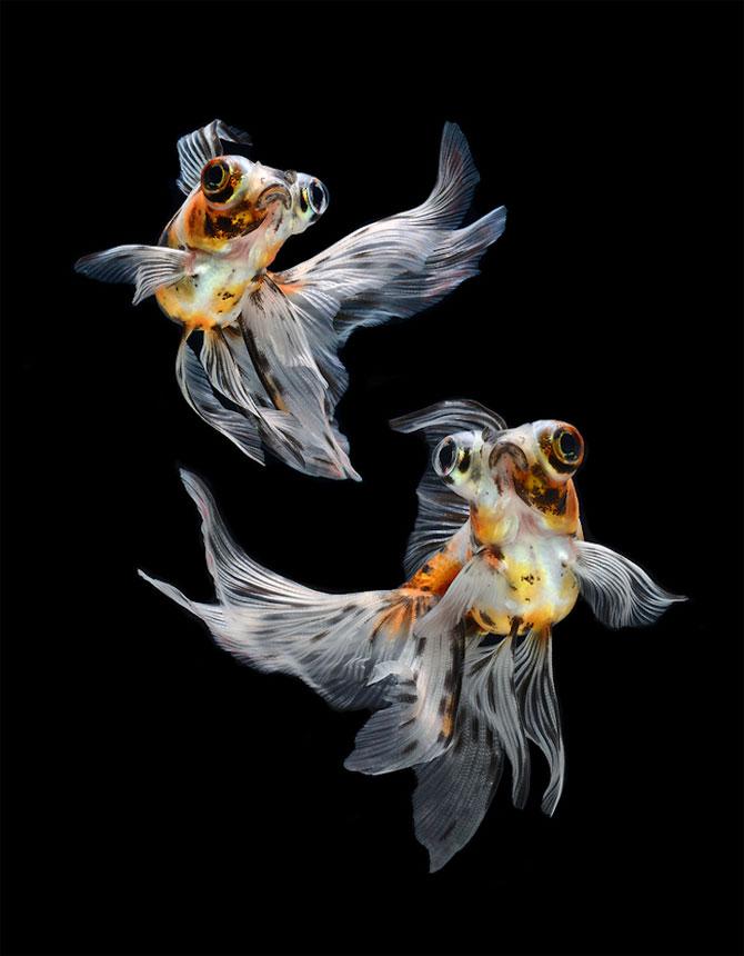 Gratia dansului pestilor in acvariu, de Visarute Angktanavich - Poza 9