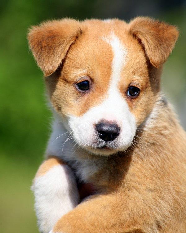 Atentie: Animale simpatice in 45 de poze! - Poza 37