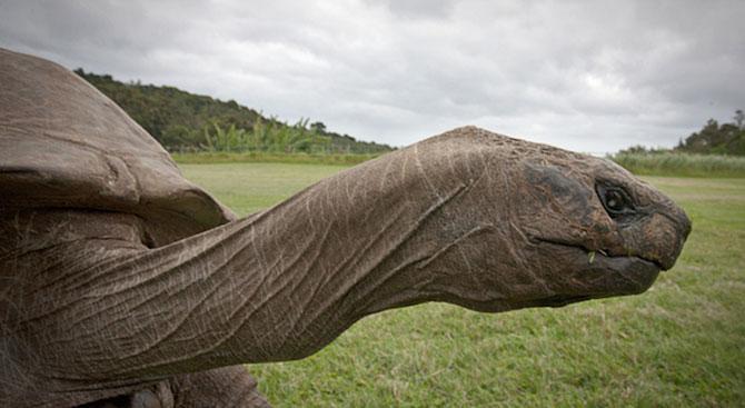 Poze de acum 100 de ani cu cel mai batran animal din lume - Poza 5