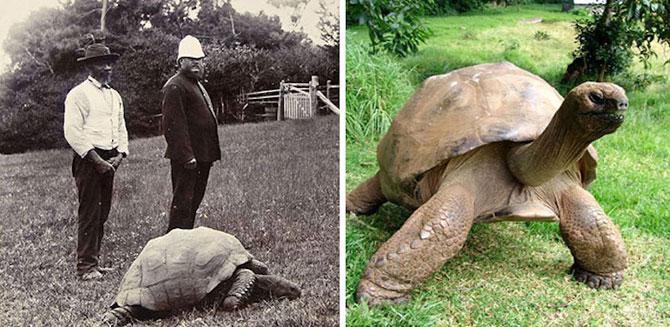 Poze de acum 100 de ani cu cel mai batran animal din lume - Poza 2