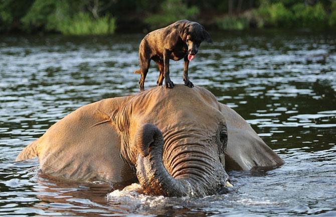 Un elefant si un caine - cei mai buni prieteni - Poza 1