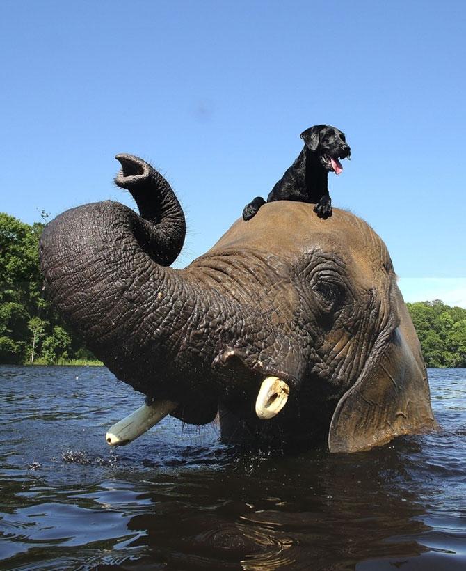 Un elefant si un caine - cei mai buni prieteni - Poza 3