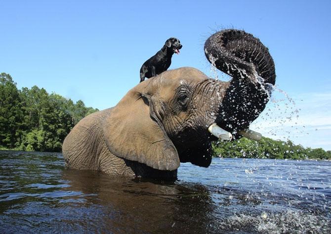 Un elefant si un caine - cei mai buni prieteni - Poza 4