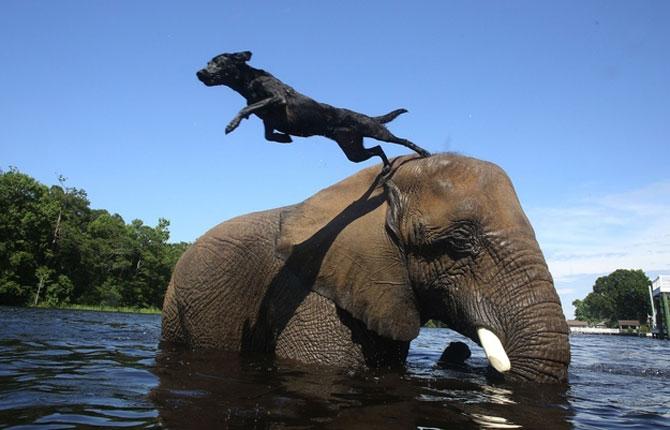 Un elefant si un caine - cei mai buni prieteni - Poza 5