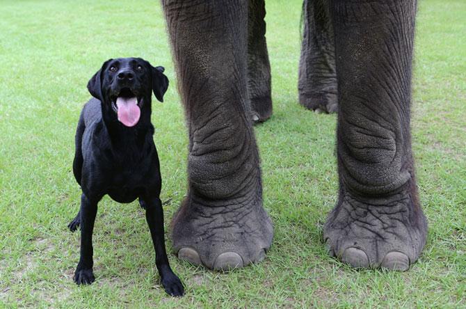 Un elefant si un caine - cei mai buni prieteni - Poza 6