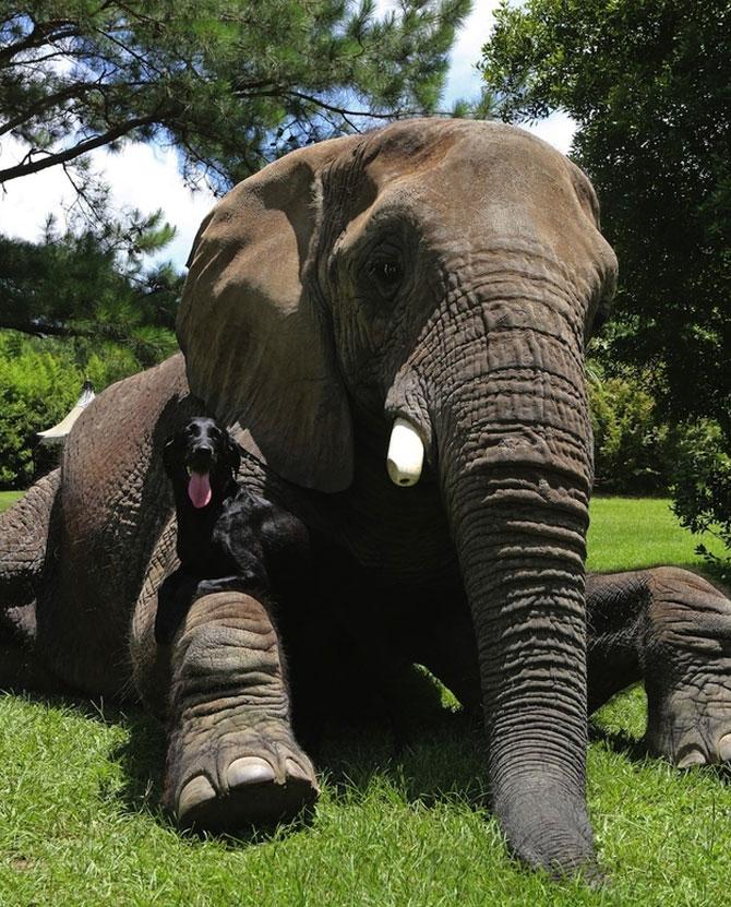 Un elefant si un caine - cei mai buni prieteni - Poza 7