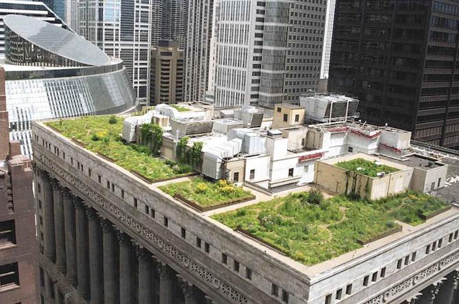 Gradina suspendata de pe Primaria din Chicago - Poza 2