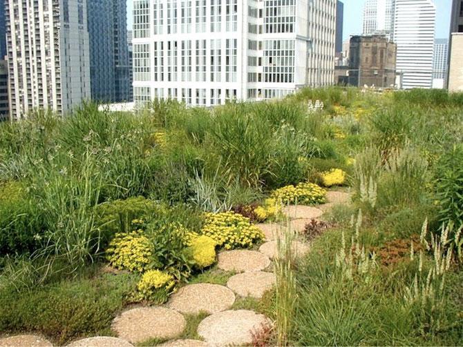 Gradina suspendata de pe Primaria din Chicago - Poza 4