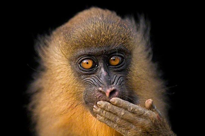 Expozitie pentru 125 de ani de National Geographic - Poza 1