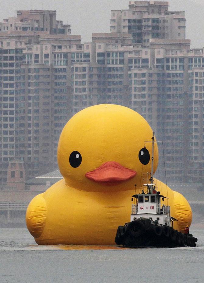 Ratusca gigantica navigheaza la Hong Kong! - Poza 1