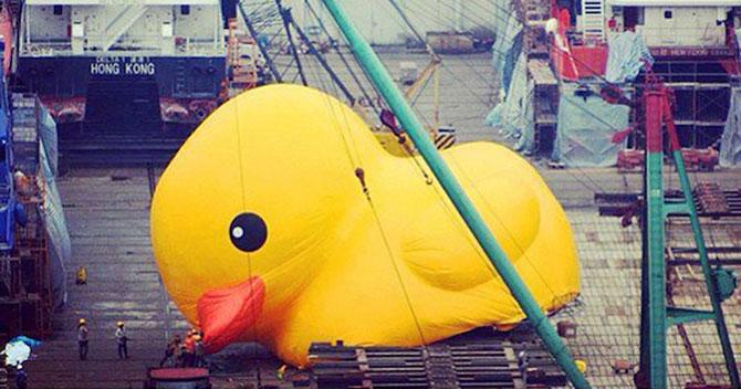 Ratusca gigantica navigheaza la Hong Kong! - Poza 2