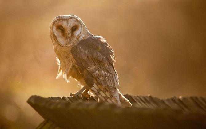 20 de zboruri in imagini, de Robert Adamec - Poza 4