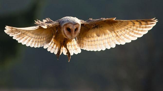20 de zboruri in imagini, de Robert Adamec - Poza 6