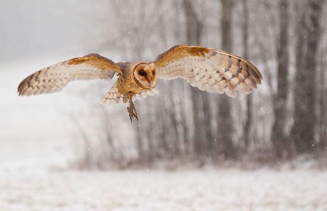 20 de zboruri in imagini, de Robert Adamec - Poza 14