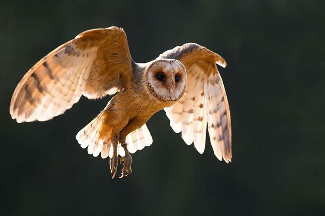 20 de zboruri in imagini, de Robert Adamec - Poza 20