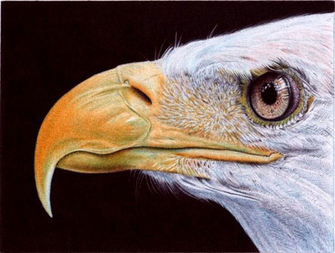 Picturi cu pixul, de Samuel Silva - Poza 3