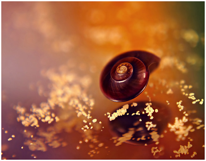 27 de poze macro impresionante - Poza 4