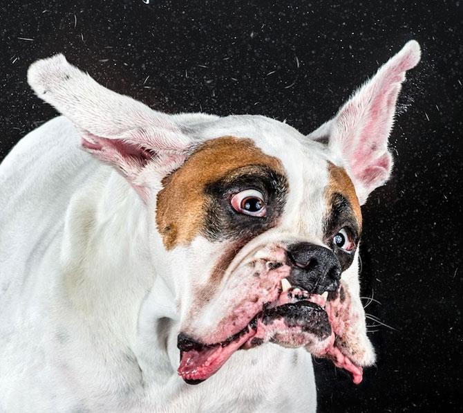 Haios: Portrete de caini care se scutura - Poza 1